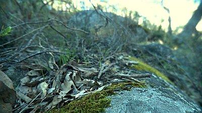 Roiding The Extreme-stony-gully-retro-01.jpg