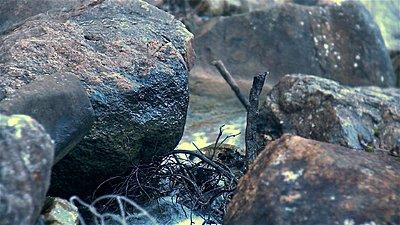 Roiding The Extreme-stony-gully-retro-03.jpg