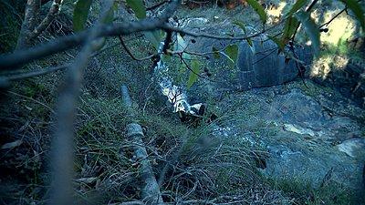 Roiding The Extreme-stony-gully-retro-06.jpg