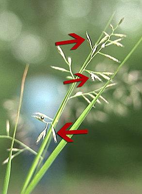 Various SGpro topics-grass.jpg