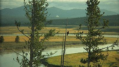 Yellowstone, Jackson Hole, Letus, Oh My-snapshot20070916082322.jpg