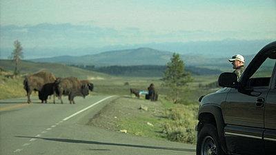 Yellowstone, Jackson Hole, Letus, Oh My-snapshot20070916082707.jpg