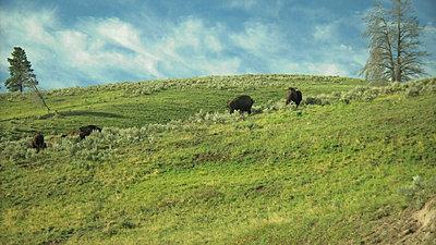 Yellowstone, Jackson Hole, Letus, Oh My-snapshot20070916082747.jpg