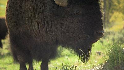 Yellowstone, Jackson Hole, Letus, Oh My-snapshot20070916082947.jpg