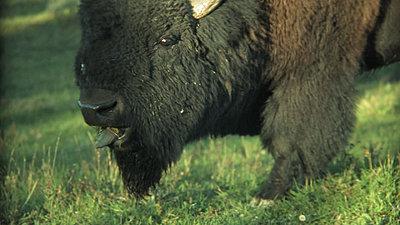 Yellowstone, Jackson Hole, Letus, Oh My-snapshot20070916084119.jpg