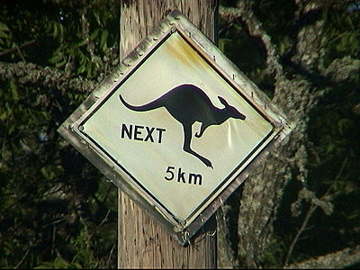 Kangaroos in Eugene?-mvc-003f.jpg