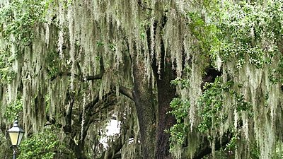 .wmv and H.264-trees-wmv.jpg
