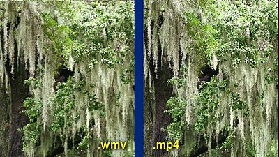 .wmv and H.264-mossy-tree-comparison.jpg