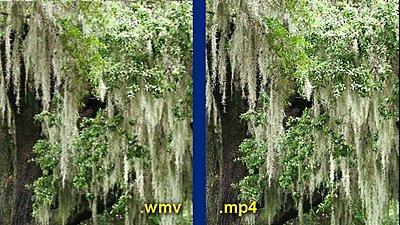 .wmv and H.264-mossy-tree-comparison.jpg