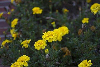Top 4 vintage lenses-tamron-17-50-f2.8-flowers.jpg