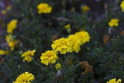 Top 4 vintage lenses-takumar-50-f2.8-flowers.jpg