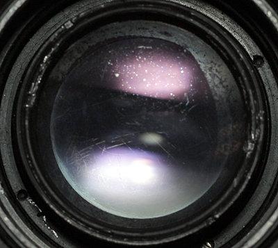 Top 4 vintage lenses-fungus-zoomed.jpg