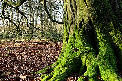 LENSES FOR STILLS & VIDEO an alternative view-pentax-67-45mm-tree-edge.jpg