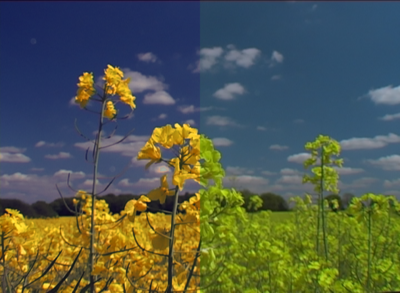 GL2 custom preset-yellow-oil-seed-rape-cc-1a.png