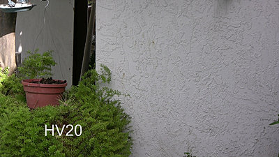Sony User Tries Canon  HV20-hv20bushwallresize.jpg