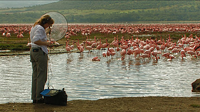 Tour To Africa-sound_recording_of_flamingoes.jpg