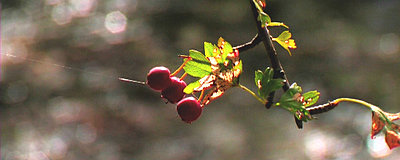 XL2 stills-cherry.jpg