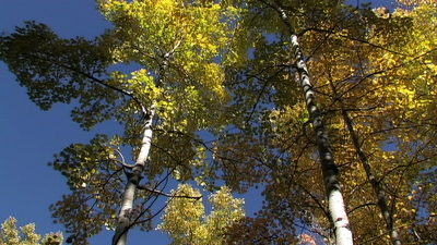 Some Fall Stills-picture-12.png