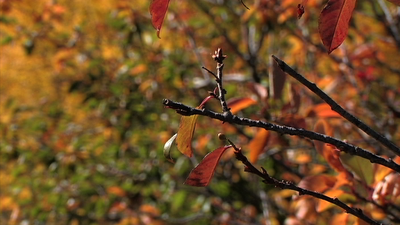 Some Fall Stills-picture-2.png
