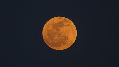 Blue Moon-img_0494.jpg