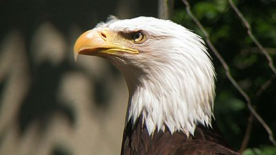 Canon XL H series -- various sample clips-eagle.jpg