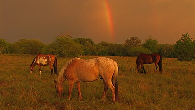 Golden Hour Rainbows-img_4470.jpg