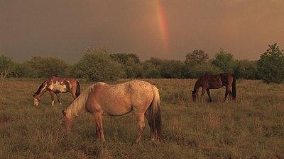 Golden Hour Rainbows-img_4472.jpg