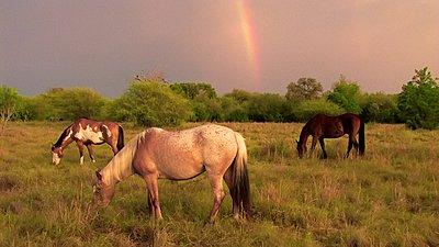 Golden Hour Rainbows-img447228de.jpg