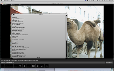 Question:DPX sequences from CineForm cf2dpx import to Assimilate SCRATCH-pihlaja-view-dpx-file-header-info-1.png