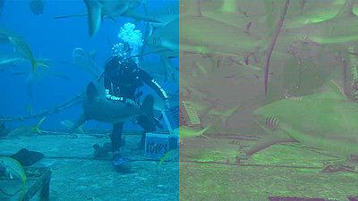 Canon DSLR Footage 10-Bit Colorspace Up-conversion Tutorial using Cineform-ae_output.jpg