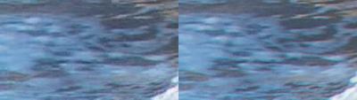 SxS vs Nanoflash stills:  Elephant Seals-waterbelowrflipper_l-ex1_r-nano_2x.png
