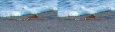 SxS vs Nanoflash stills:  Elephant Seals-wateredge_l-ex1_r-nano_2x.png