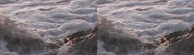 SxS vs Nanoflash stills:  Elephant Seals-wavelet_0003_l-ex1_r-nano_2x.png