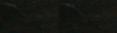 SxS vs Nanoflash stills:  Elephant Seals-leftcorner_0004_l-ex1_r-nano_2x.png
