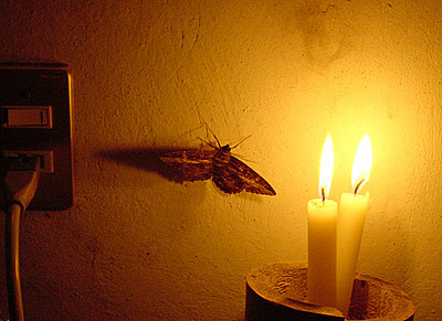 DVC 11 Sign Up Thread - Holiday Charity Challenge-moth_to_light.jpg