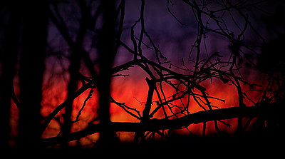 Tales of Wonder and Woe - Charity Film Challenge 2012-trees_sunset.jpg