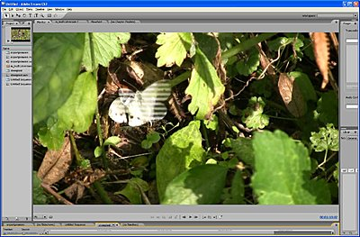 stripy dvd image-imagebanding.jpg