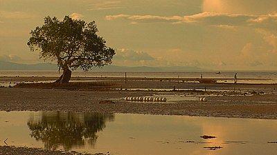 SIQUIJOR Island of mystery-siquijor-tree-shore.jpg