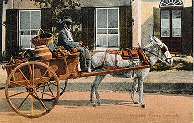 What Do You Drive?-donkey-cart.jpg