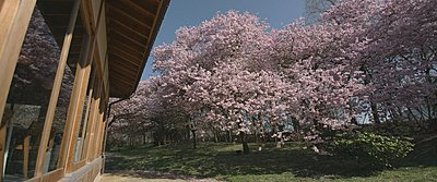 Japanese garden on the jvc gy ls300 part II-before02.jpg