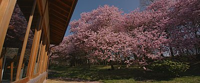 Japanese garden on the jvc gy ls300 part II-after02.jpg