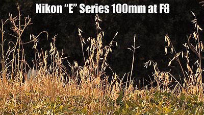 MTF adatper and Nikon lenses, Good?  Depends upon lens.-nikone100mmf8b.jpg