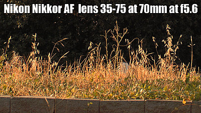 MTF adatper and Nikon lenses, Good?  Depends upon lens.-nikkoraf35-70mm70redone.jpg