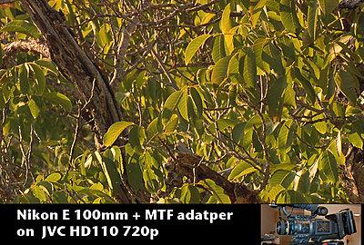 MTF adatper and Nikon lenses, Good?  Depends upon lens.-nikone100tree.jpg