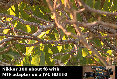 MTF adatper and Nikon lenses, Good?  Depends upon lens.-nikkor-300f8tree.jpg