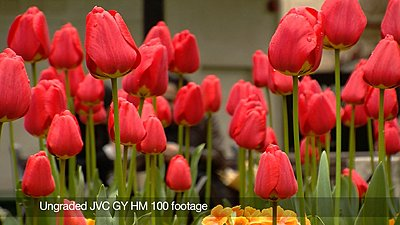 Video review of JVC GY-HM 100-still1.jpg