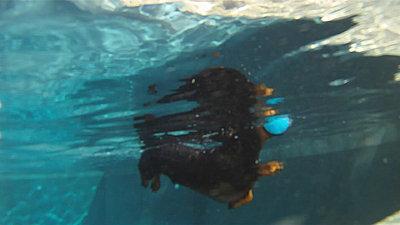 GoPro or POV camera forum?-water-hound.woody01.jpg