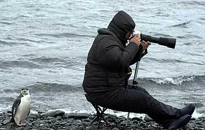 Is this shooter YOU???-penguin-photographer1.jpg