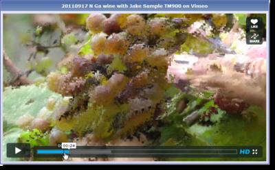 The Panasonic TM900 Users Thread-vimeo-winery.png