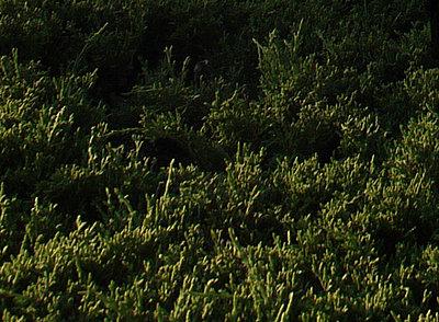 HELP THE NEWBIES THREAD.....please.-12mm_bush.jpg